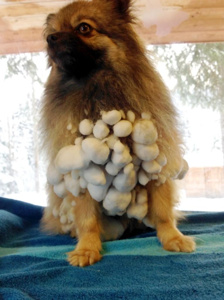 Mini's Snow Balls