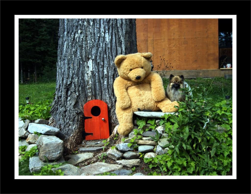 WARNING: Bear in Area